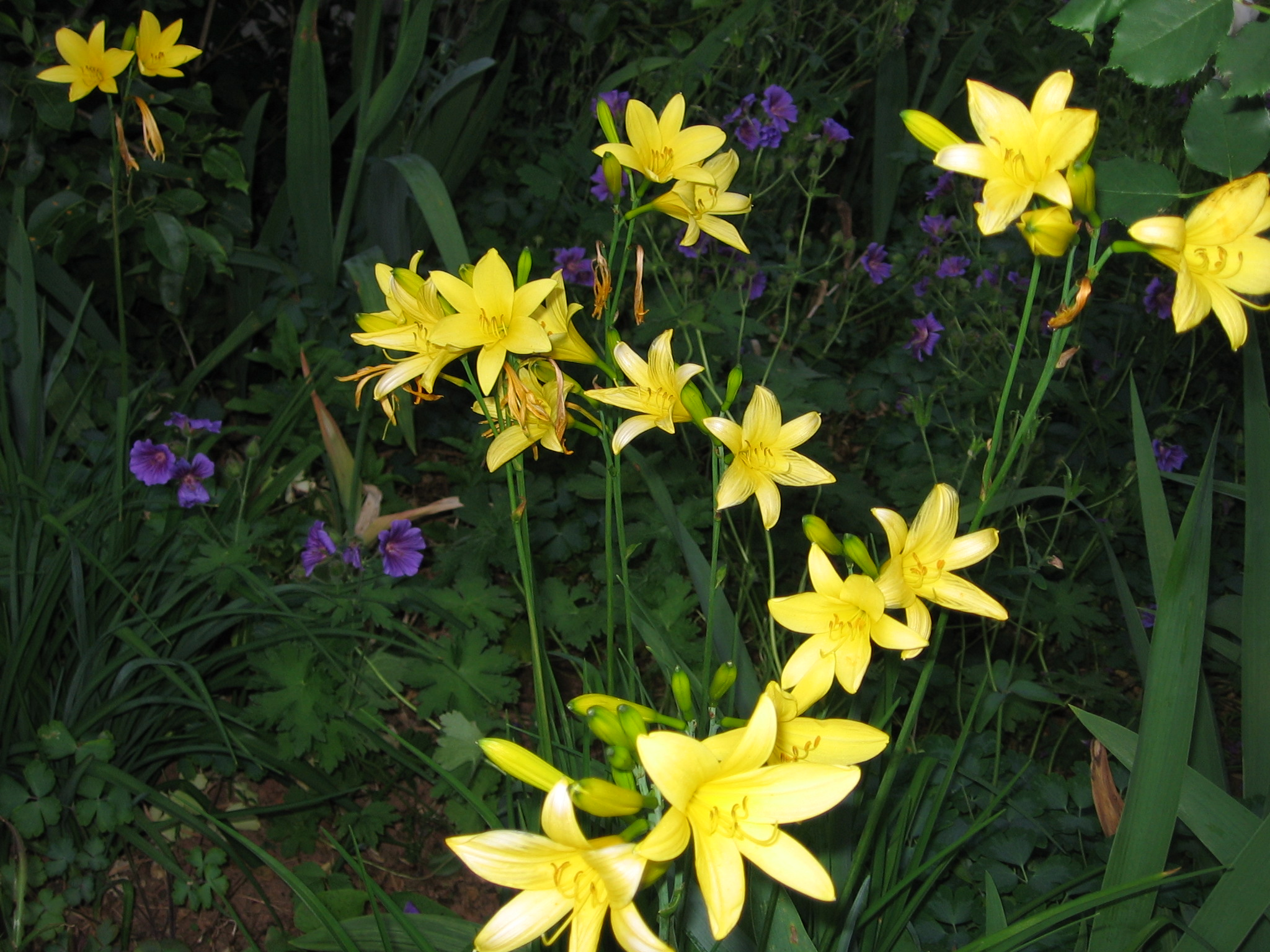 Karch-Blume. IMG_0385 JPG_0032 (2)
